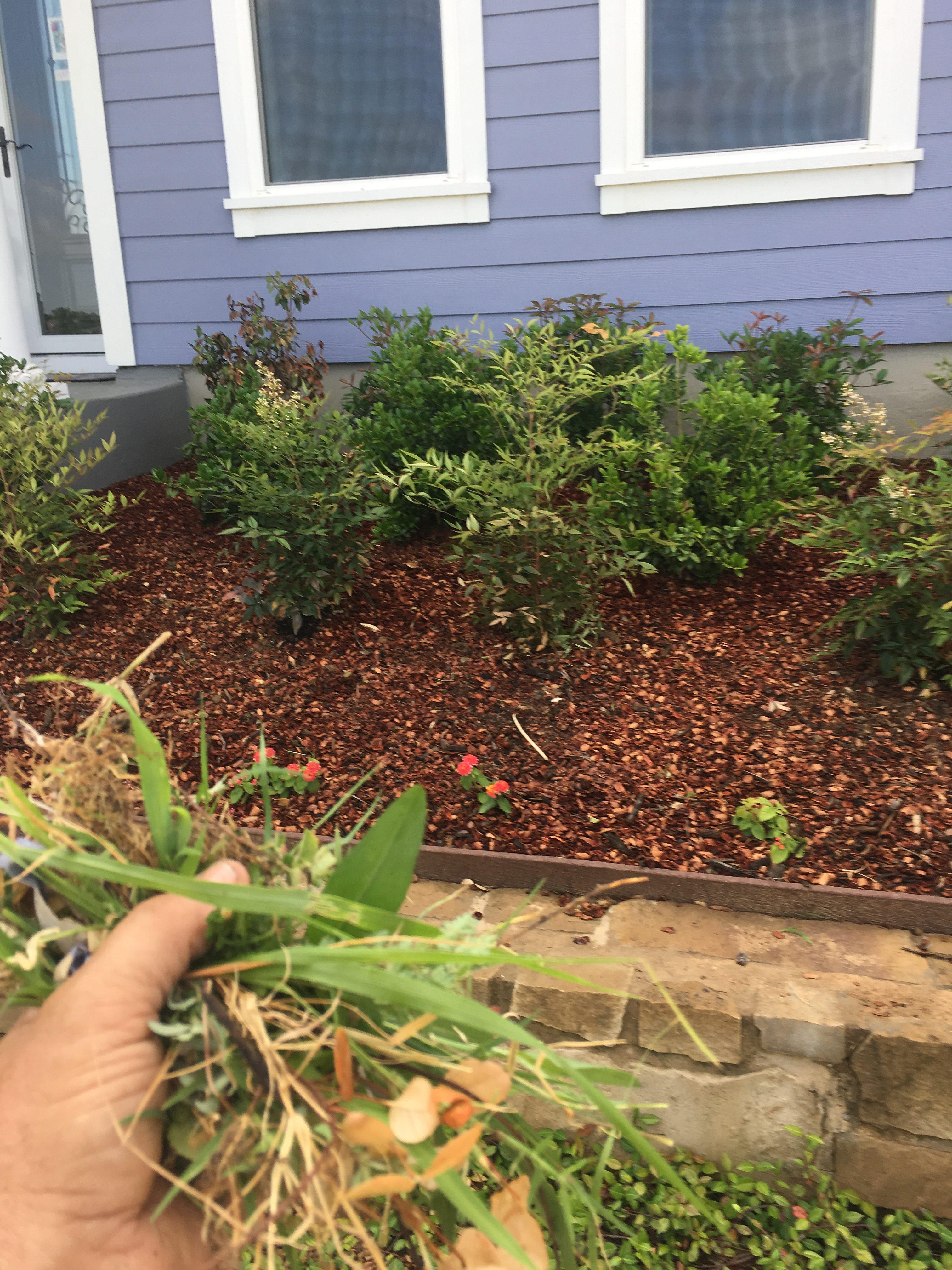 Spring weeding and mulching
